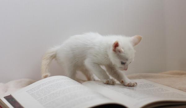 OneNote の本、おすすめをご紹介。